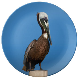 Brown Pelican Perching on a Post Plate