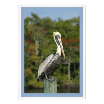 Beach Themed Brown Pelican Photo Print