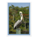 Brown Pelican Photographic Print