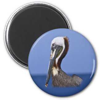 Brown Pelican Portrait Magnet