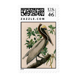 Brown Pelican Postage Stamps
