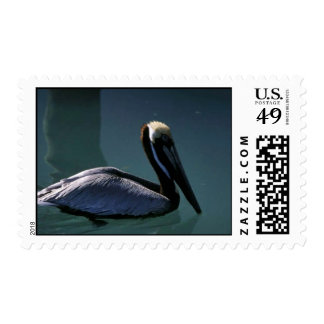 Brown Pelican Postage