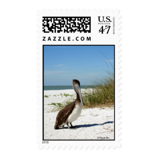Brown Pelican Postage