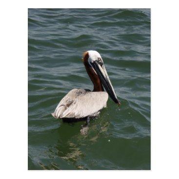 Beach Themed Brown Pelican Postcard