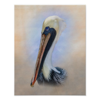Brown Pelican Posters
