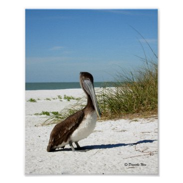 Beach Themed Brown Pelican Poster