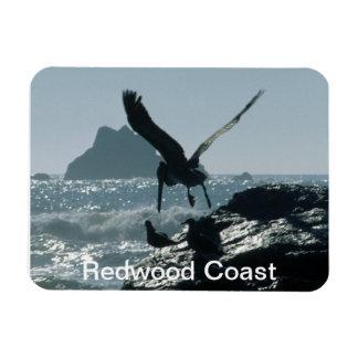 Brown Pelican Redwood Coast Rectangular Magnets