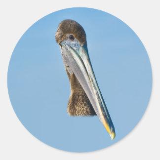 Brown Pelican Sticker