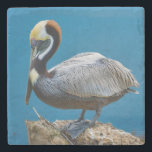 """Brown Pelican Stone Coaster<br><div class=""""desc"""">The smallest of the pelican species, the Brown Pelican, has beautiful coloring as a adult with the white feathers on his head and neck. Most striking of all is his bright blue yes and pink eye rings. In this nature lover's image he is seen perched on a post near water's...</div>"""