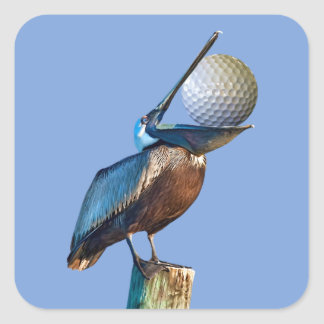 Brown Pelican with Golf Ball Square Sticker