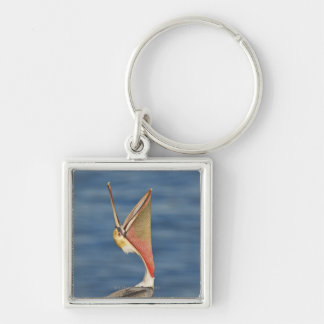 Brown Pelican with mouth open Keychain