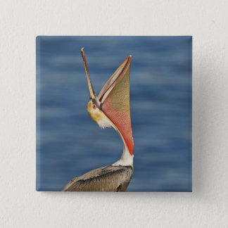 Brown Pelican with mouth open Pinback Button