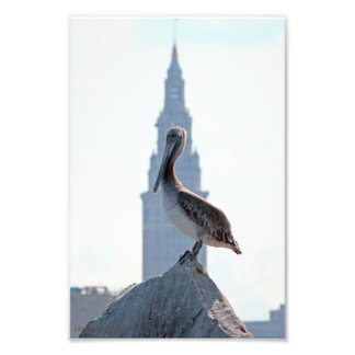 Brown Pelican with Terminal Tower in Cleveland Photo Print