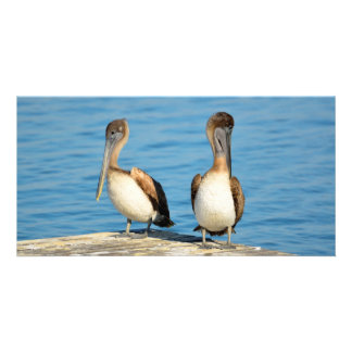 Brown Pelicans on a dock Card