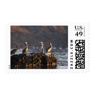 Brown pelicans on rock in Puerto Escondido near Postage