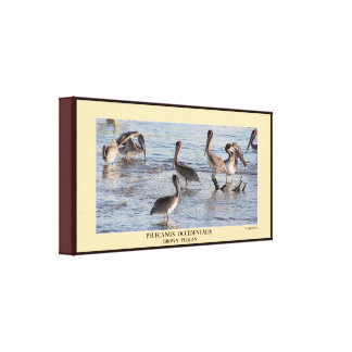 Brown Pelicans Wrapped Canvas Canvas Print
