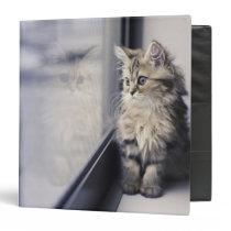 Brown Persian Kitten Looking Out Window 3 Ring Binder