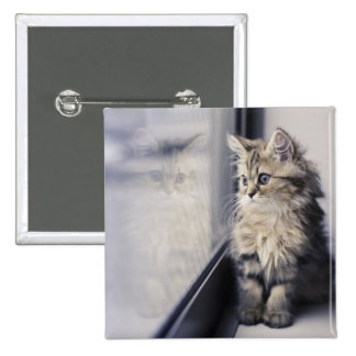 Brown Persian Kitten Looking Out Window Button
