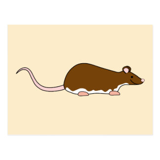 Brown Pet Rat. Berkshire, White Belly. Post Card