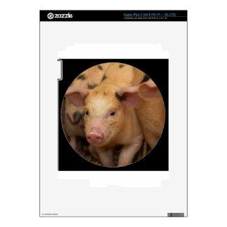 """Brown piglet"" iPad 3 Decal"