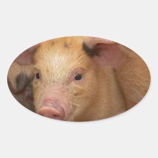 """""""Brown piglet"""" Oval Sticker"""