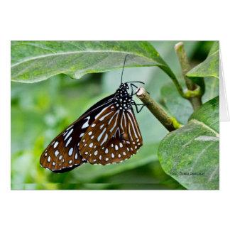 Brown pintó la mariposa tarjeta de felicitación