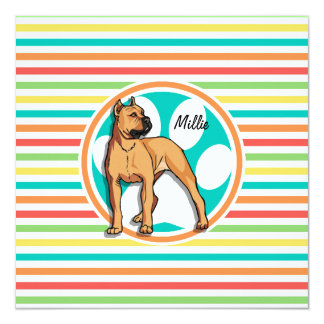Brown Pit bull; Bright Rainbow Stripes Announcement