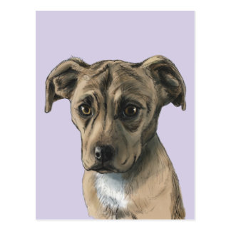 Brown Pit Bull Puppy Drawing Postcard