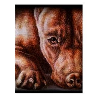 Brown pitbull face drawing of pet portrait dog postcard