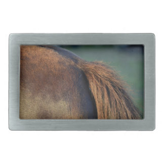 Brown pony hindquarters and tail belt buckle