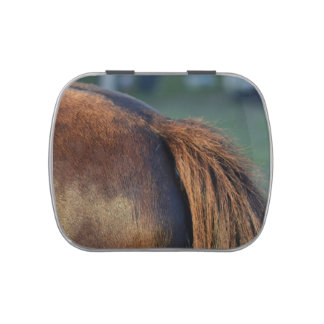 Brown pony hindquarters and tail jelly belly tin