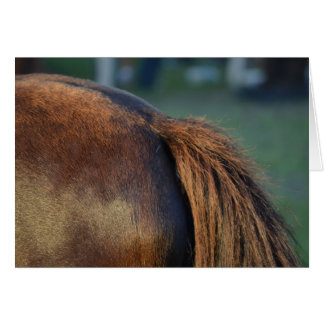 Brown pony hindquarters and tail cards