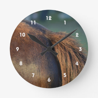Brown pony hindquarters and tail clock