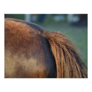 Brown pony hindquarters and tail flyers