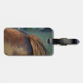 Brown pony hindquarters and tail bag tag