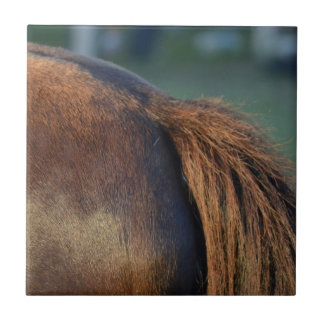 Brown pony hindquarters and tail tile