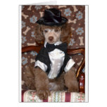 Brown Poodle Puppy in Suit Cards