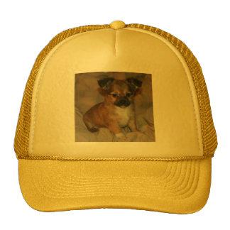 Brown Puppy on Orange-Yellow Cap