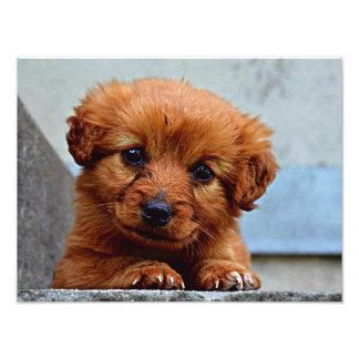 Brown Puppy Portrait Photo