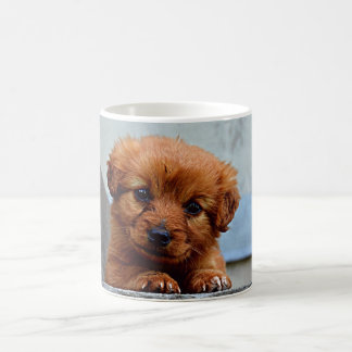 Brown Puppy Portrait Photo Coffee Mug