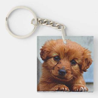 Brown Puppy Portrait Photo Keychain