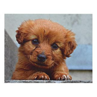 Brown Puppy Portrait Photo Panel Wall Art