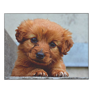 Brown Puppy Portrait Photo Wood Print