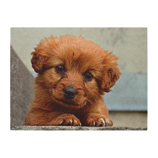 Brown Puppy Portrait Photo Wood Wall Decor