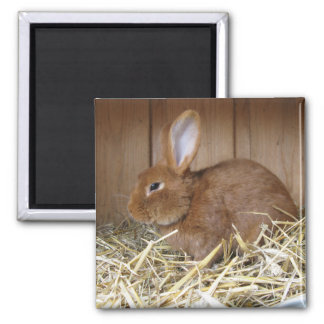 Brown Rabbit in Hay 2 Inch Square Magnet