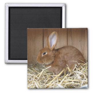 Brown Rabbit in Hay Magnet