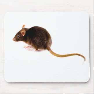 Brown Rat Mouse Pad