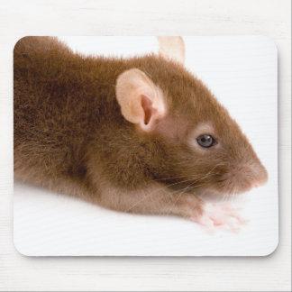 Brown Rat Mouse Pad