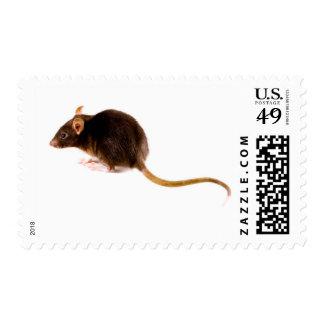 Brown Rat Postage Stamps