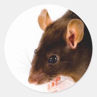 Brown Rat Round Stickers